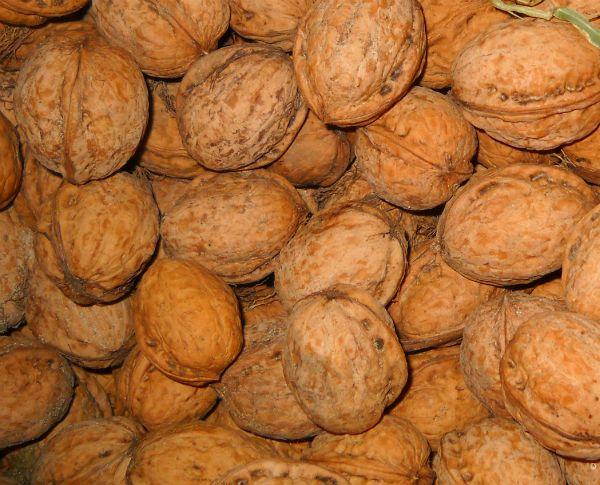 Урожай грецких орехов