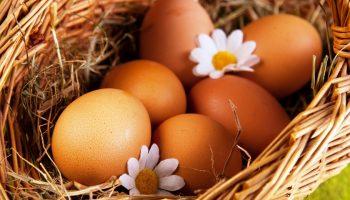 11 интересных фактов о яйцах, которых вы не знаете