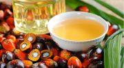 Так ли опасно пальмовое масло, как его представляют