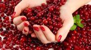 Какие ягоды положительно влияют на качество крови