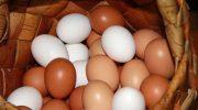 5 мифов о яйцах в которые давно пора перестать верить