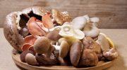 5 опасных видов грибов которые могут готовить только профессионалы