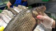5 хитростей которые помогут с первого взгляда отличить свежую рыбу от несвежей