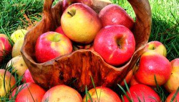 5 самых полезных для здоровья яблочных сортов