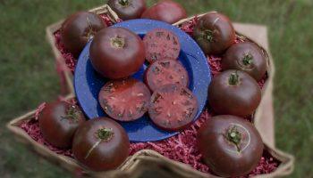Черные, фиолетовые, зеленые: необычные  но очень вкусные сорта помидор