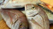 Откуда в рыбе ртуть и как ее не съесть