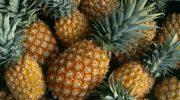 5 фактов о выращивании ананаса, которые вас удивят