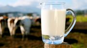 10 мифов о молоке, в которые верят практически все