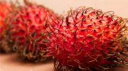 5 «волосатых» фруктов, которые стоит попробовать каждому