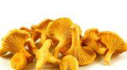 Почему грибы лисички никогда не бывают червивыми