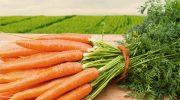 Что случится если есть слишком много моркови каждый день