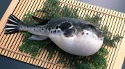 Почему рыба фугу от природы не опасна и как она становится ядовитой