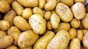 Почему картофель называли чертовым яблоком