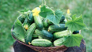10 фруктов и овощей, которые выглядели совсем иначе до того, как попали к людям на грядки
