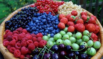 Почему большинство привычных ягод не является ими на самом деле