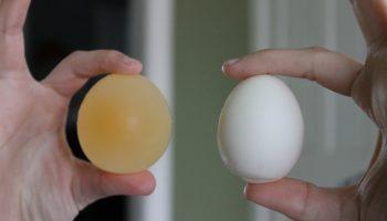 Что произойдет с яйцом если его положить в уксус