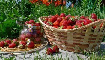 Почему клубника не является ягодой в действительности