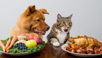 5 привычных для людей продуктов, которые нельзя давать домашним животным