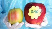 Плохи или хороши ГМО продуктов на своем столе