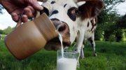 Почему в средневековье питьевое молоко было огромной роскошью, доступной только богачам