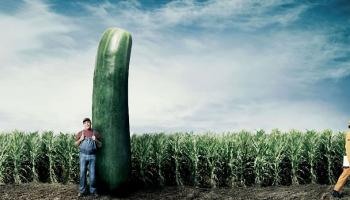 Сколько весил самый большой огурец в мире