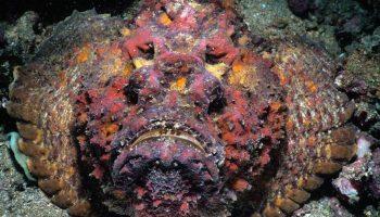 Почему рыбу-камень можно есть, но нельзя держать в руках