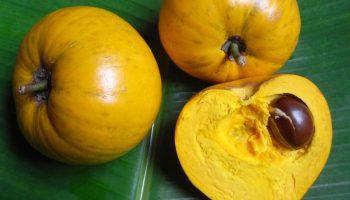 За что плоды растения канистел прозвали яичным фруктом