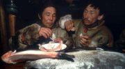Какие национальные блюда эскимосов лучше не показывать впечатлительным людям