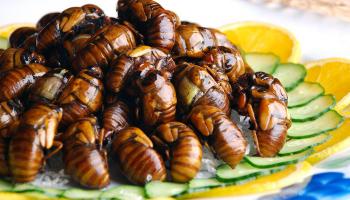 Почему японцы едят жареных ос как семечки