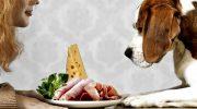 5 привычных для людей продуктов, которые не стоит давать животным