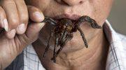 В какой стране едят самых крупных пауков в мире