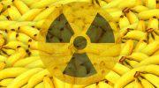 Почему бананы называют самыми радиоактивными фруктами