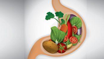 Какие продукты быстрее всего усваиваются организмом