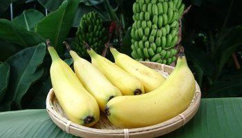 Почему японский банан Mongee можно назвать безотходным