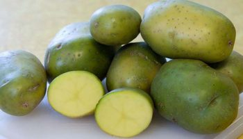 Почему не стоит покупать картофель зеленого цвета