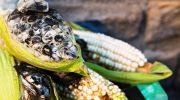 Чем мексиканский трюфель отличается от обычного