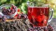 Все что нужно знать о чае каркаде, в чем его полезные свойства