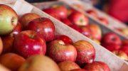5 самых вкусных сортов яблок, которые можно купить на рынке